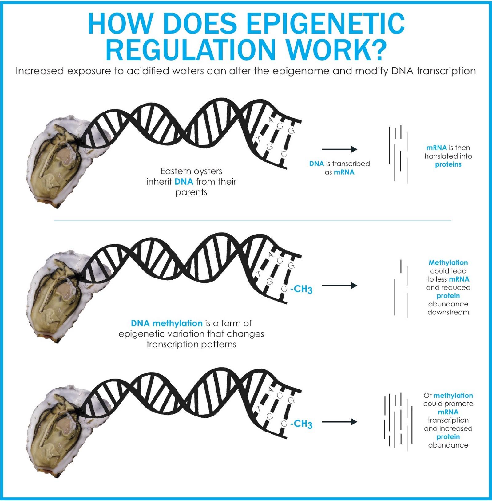 engage_genes.jpeg