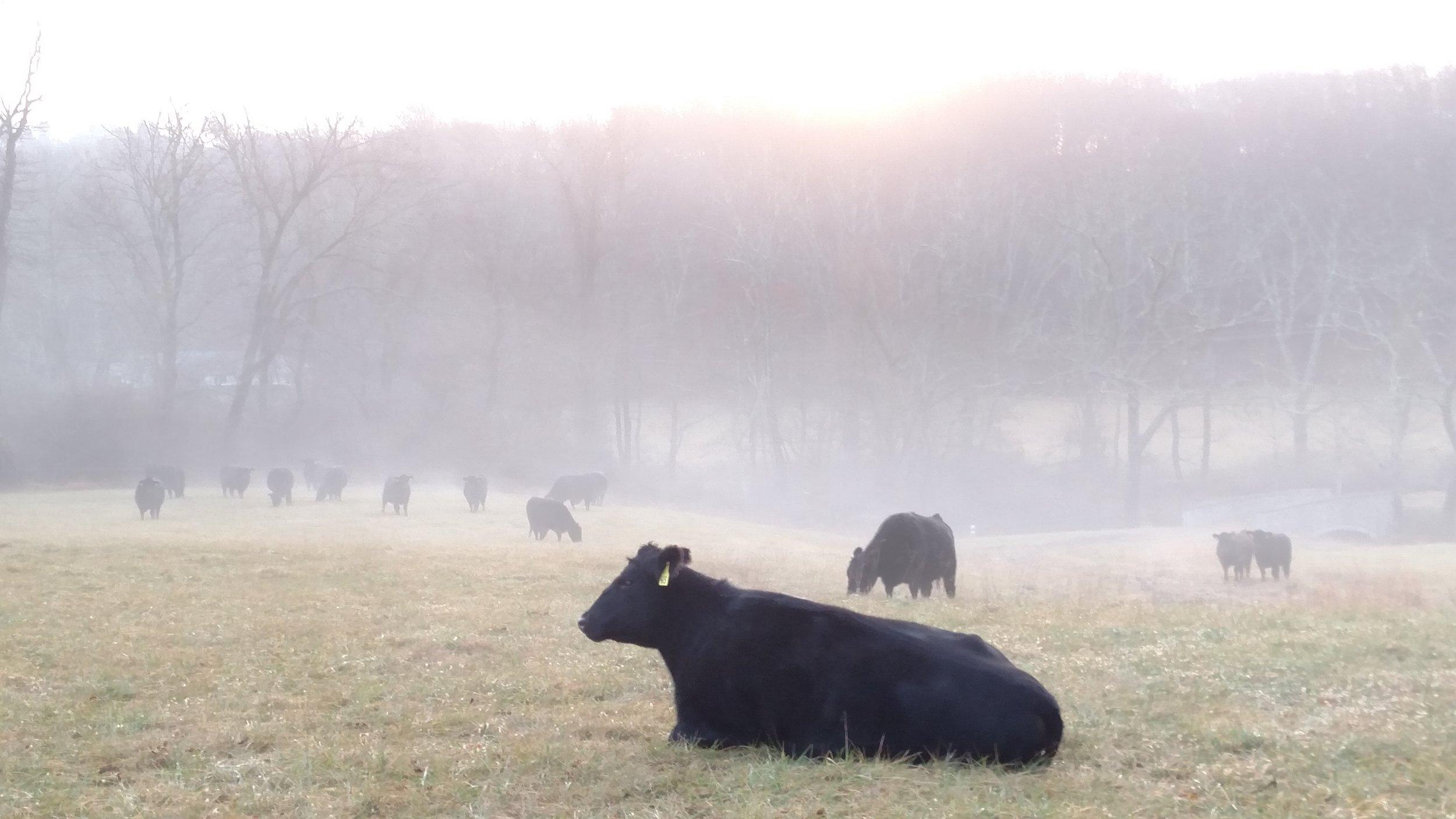 fall pasture fog