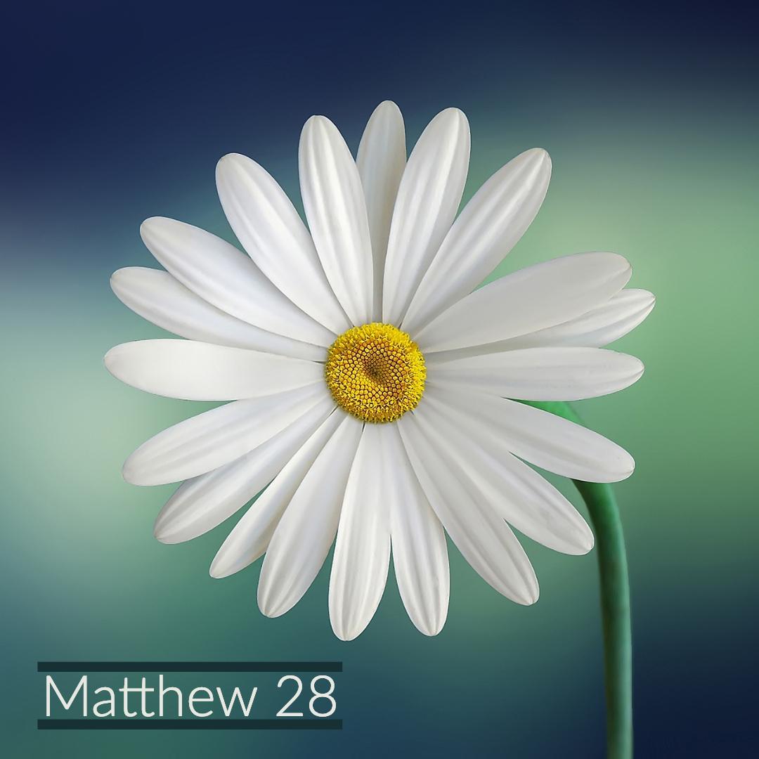 Matt 28.jpg