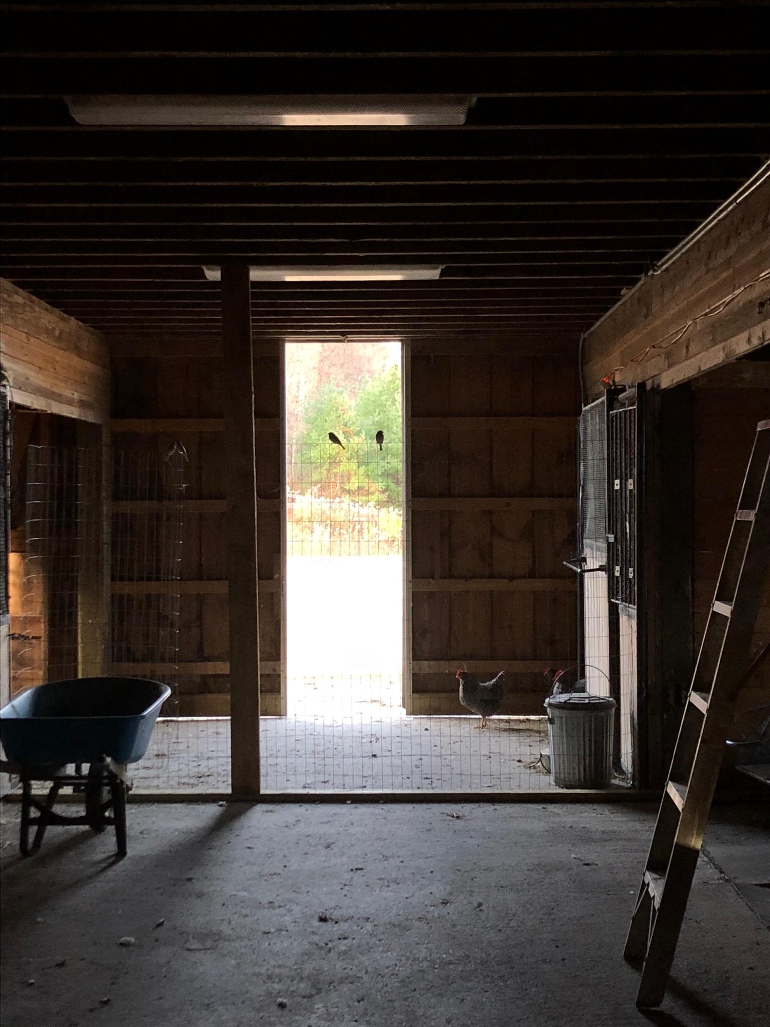 coop-area-barn-2birds.jpg