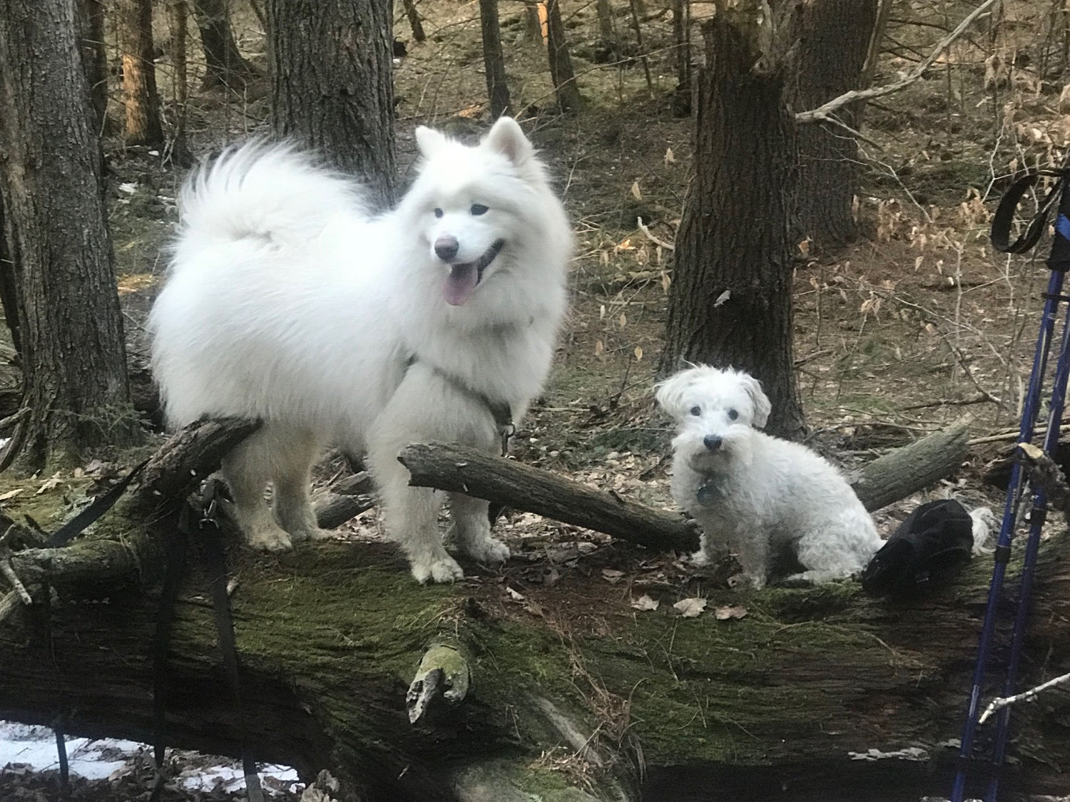 Yurei and skip taking a hike