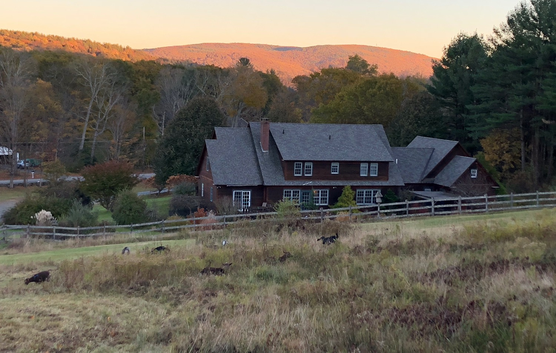 sunset-back-house-goats.jpg