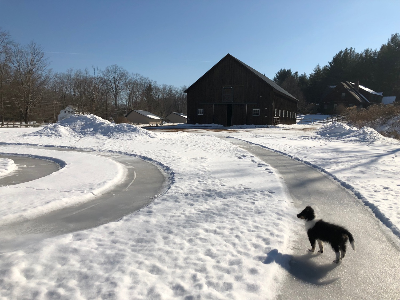 barn-snow-circles-pup.jpg