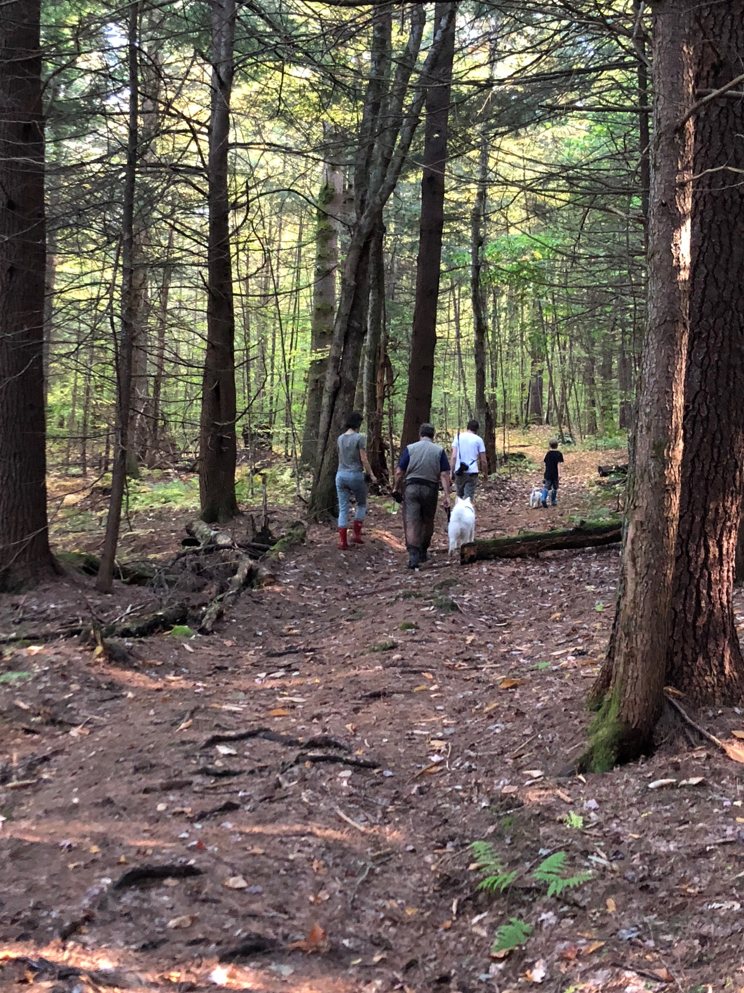 forest-walking.jpg