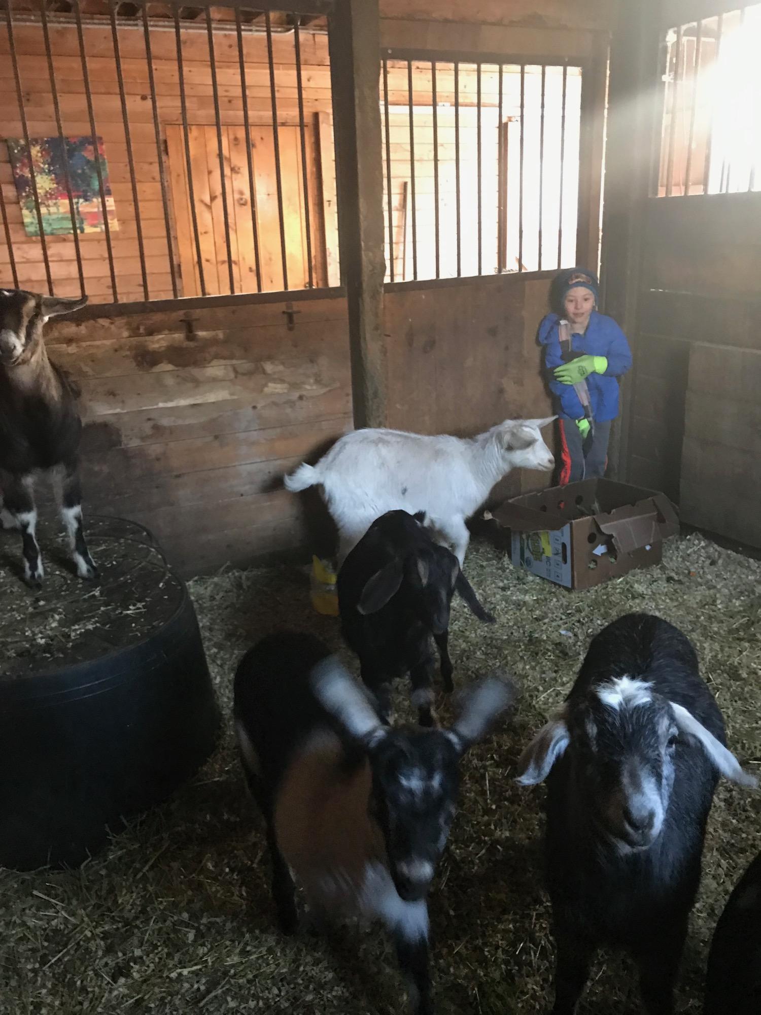 littleboy-w-goats.jpg