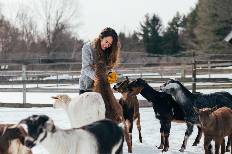 guest-goats-petting.jpg