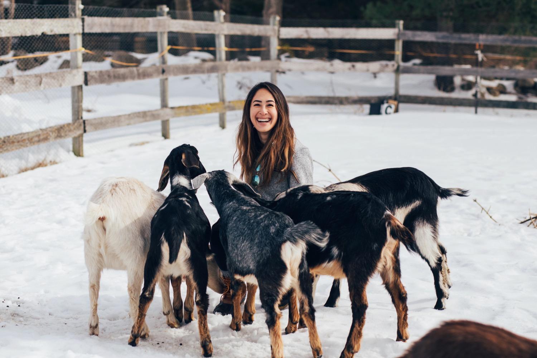 guest-goats-surround.jpg