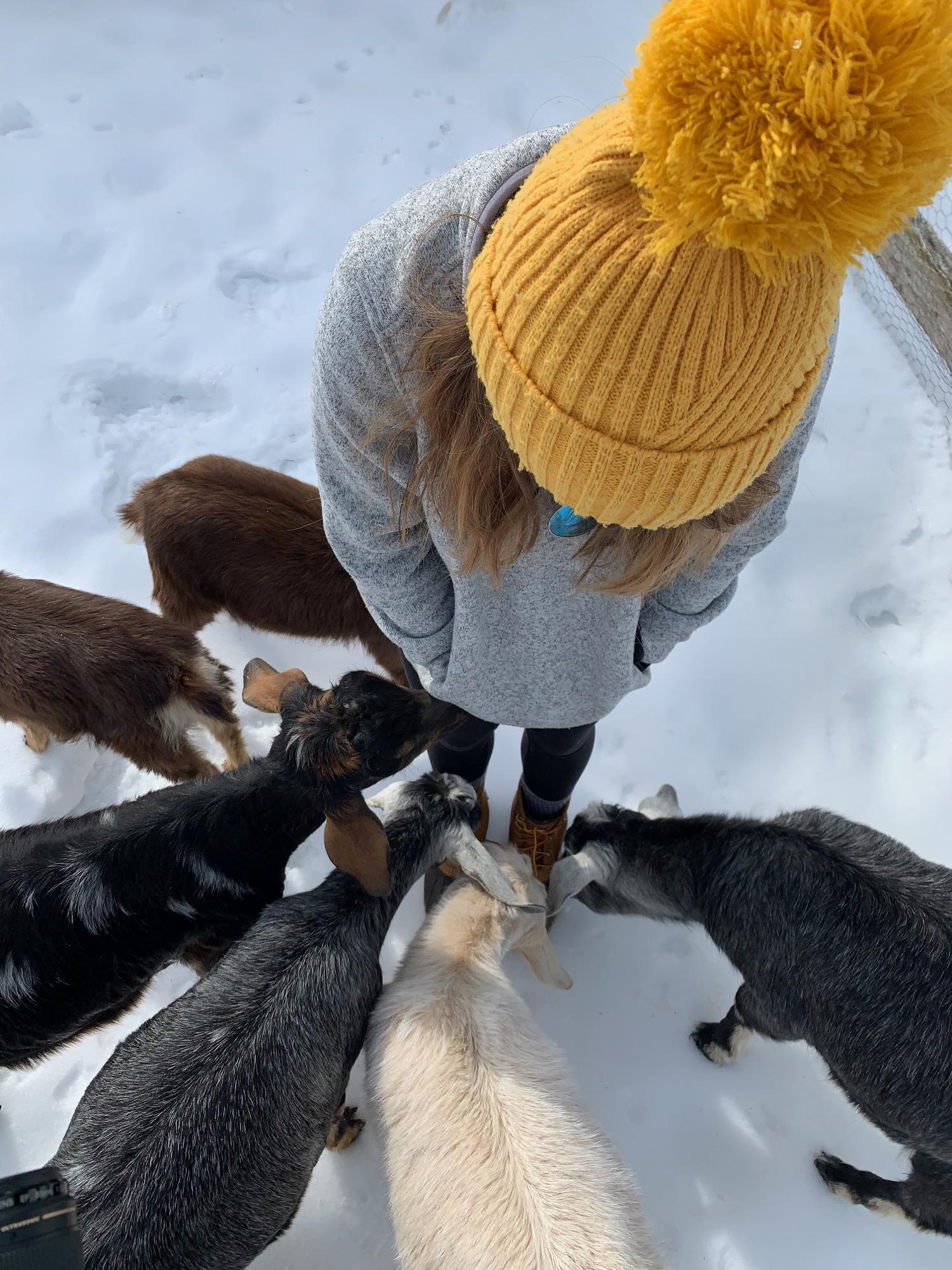 yellow-hat-goats-guest.jpg