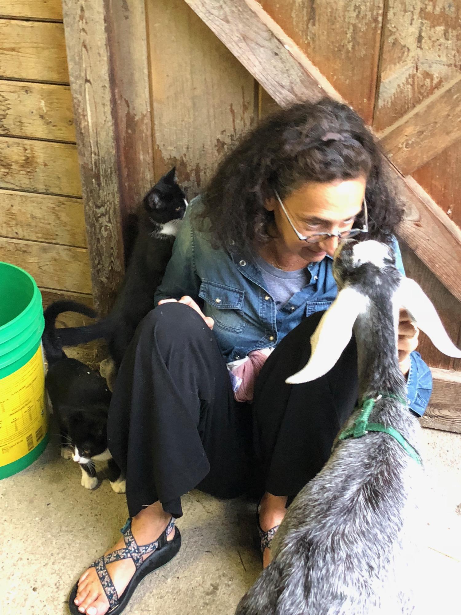guest-kittens-goat.jpg