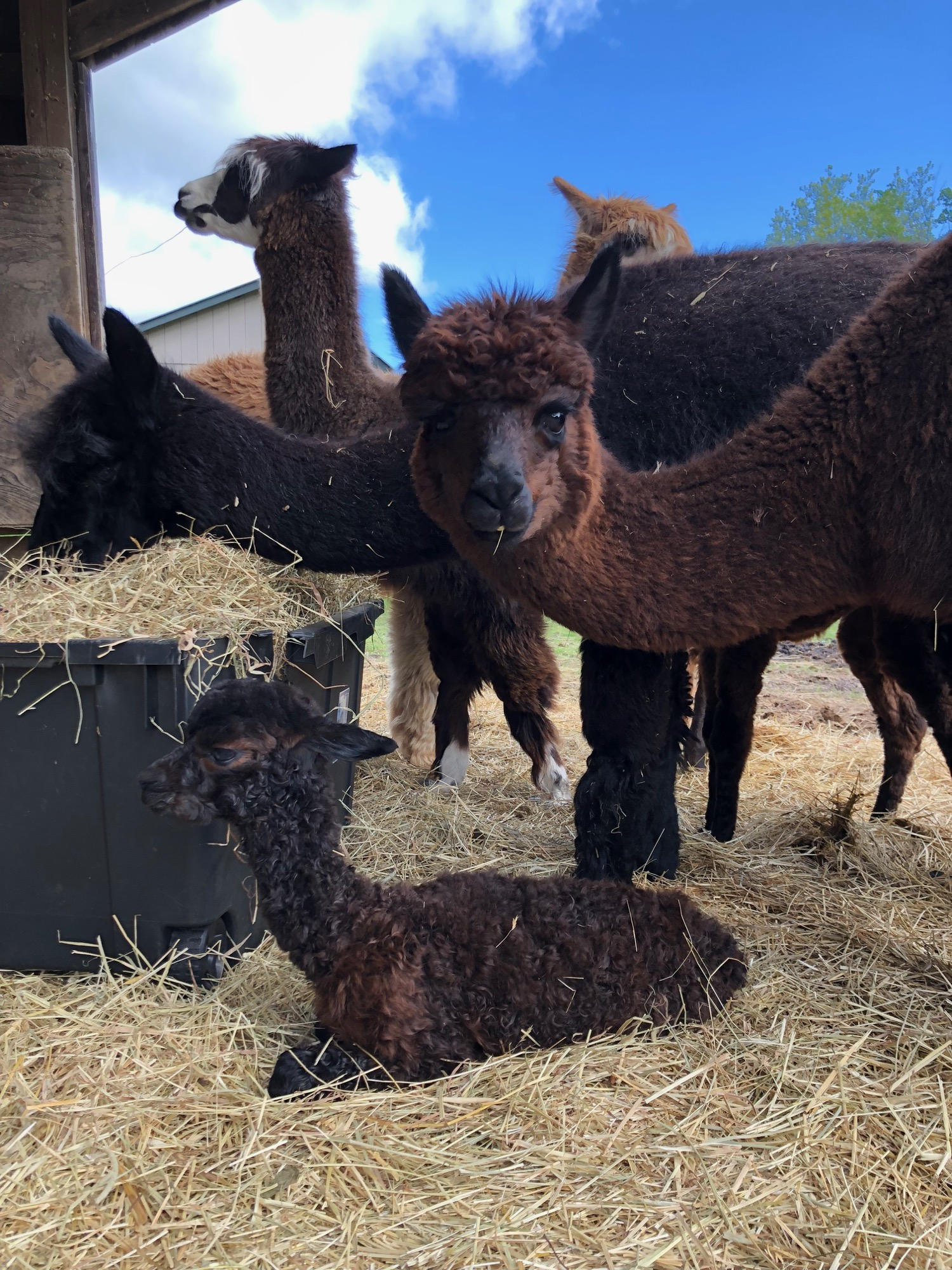 On May 24, Romeo was born! Ballet is his proud mother.