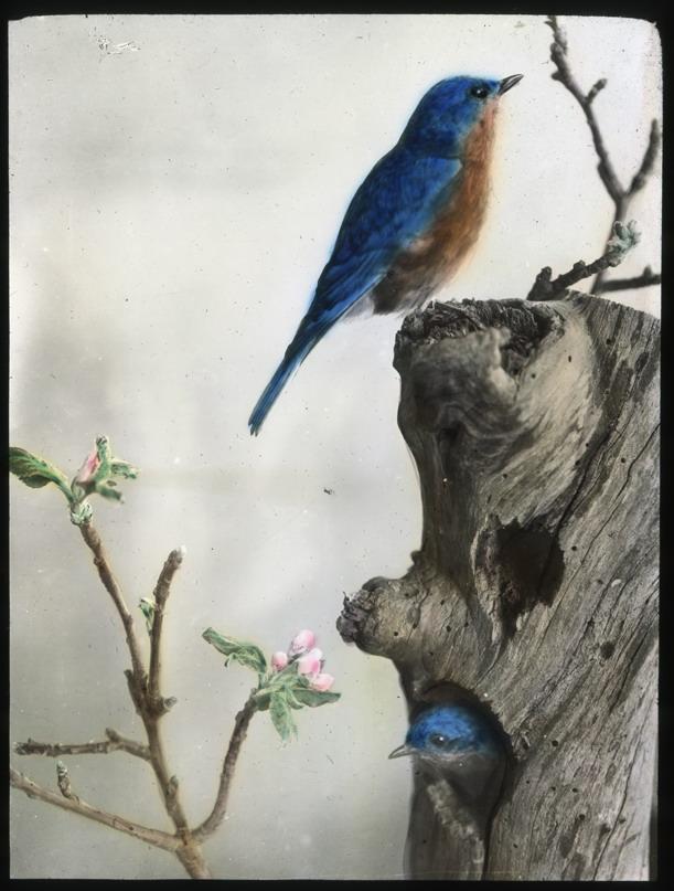 PIPC_16_Birds-in-Spring_0016.jpg