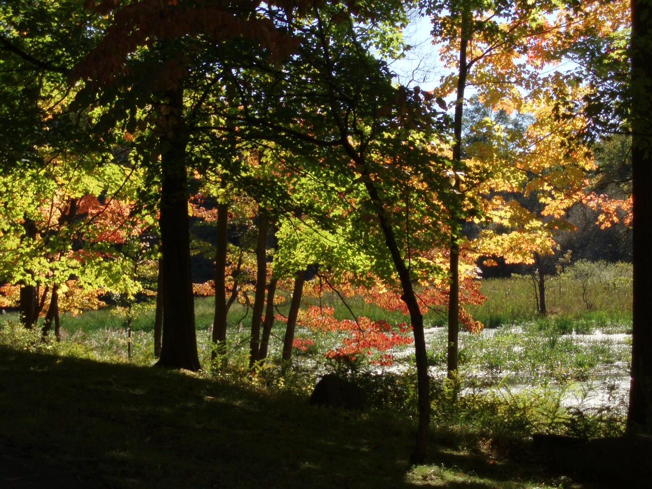 SPBF autumn(2).jpg