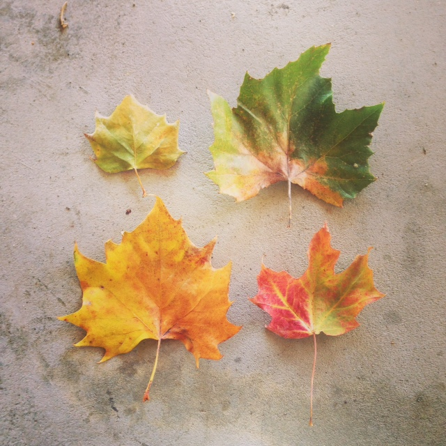 fall leaves2.jpg