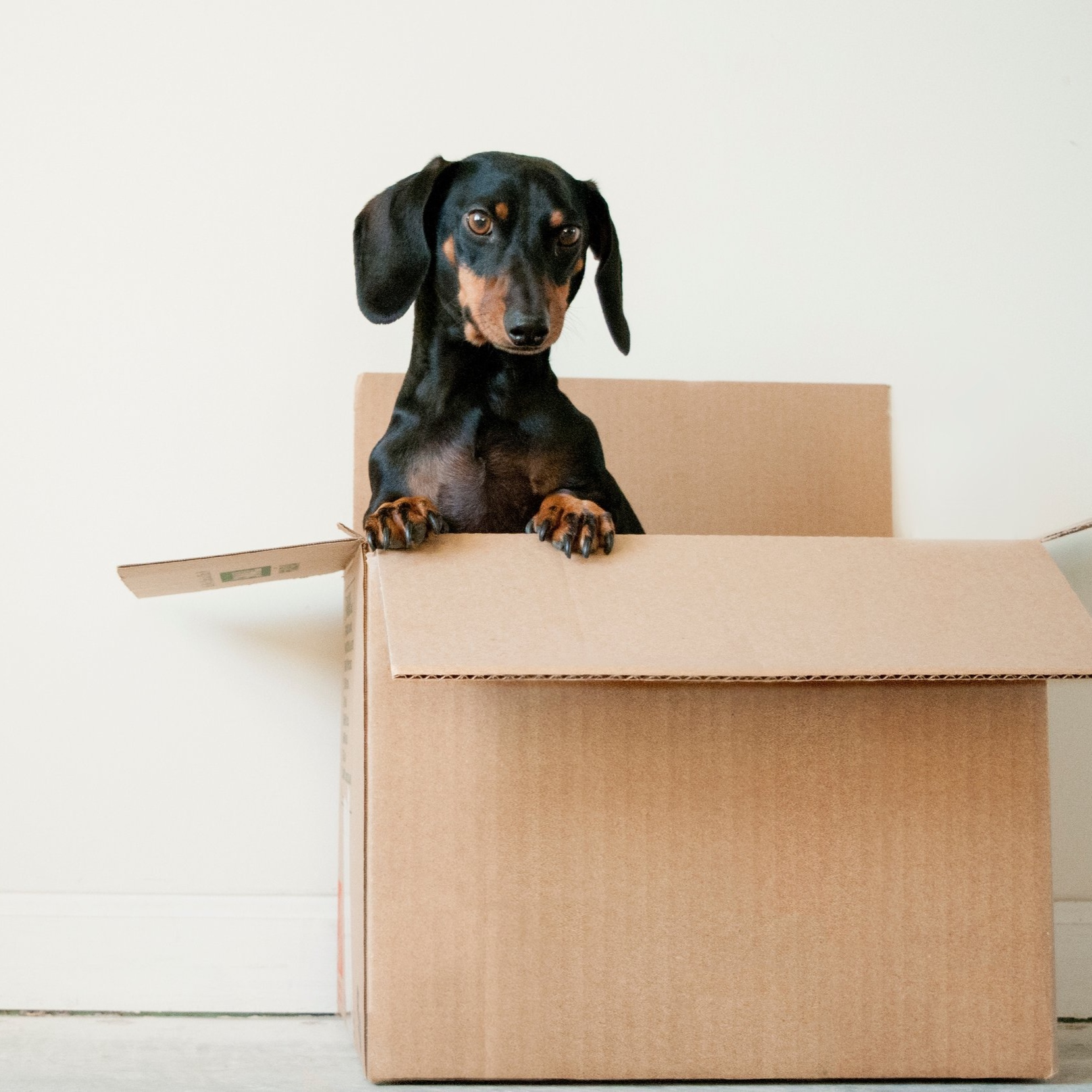 Steps to a successful move|positively jane