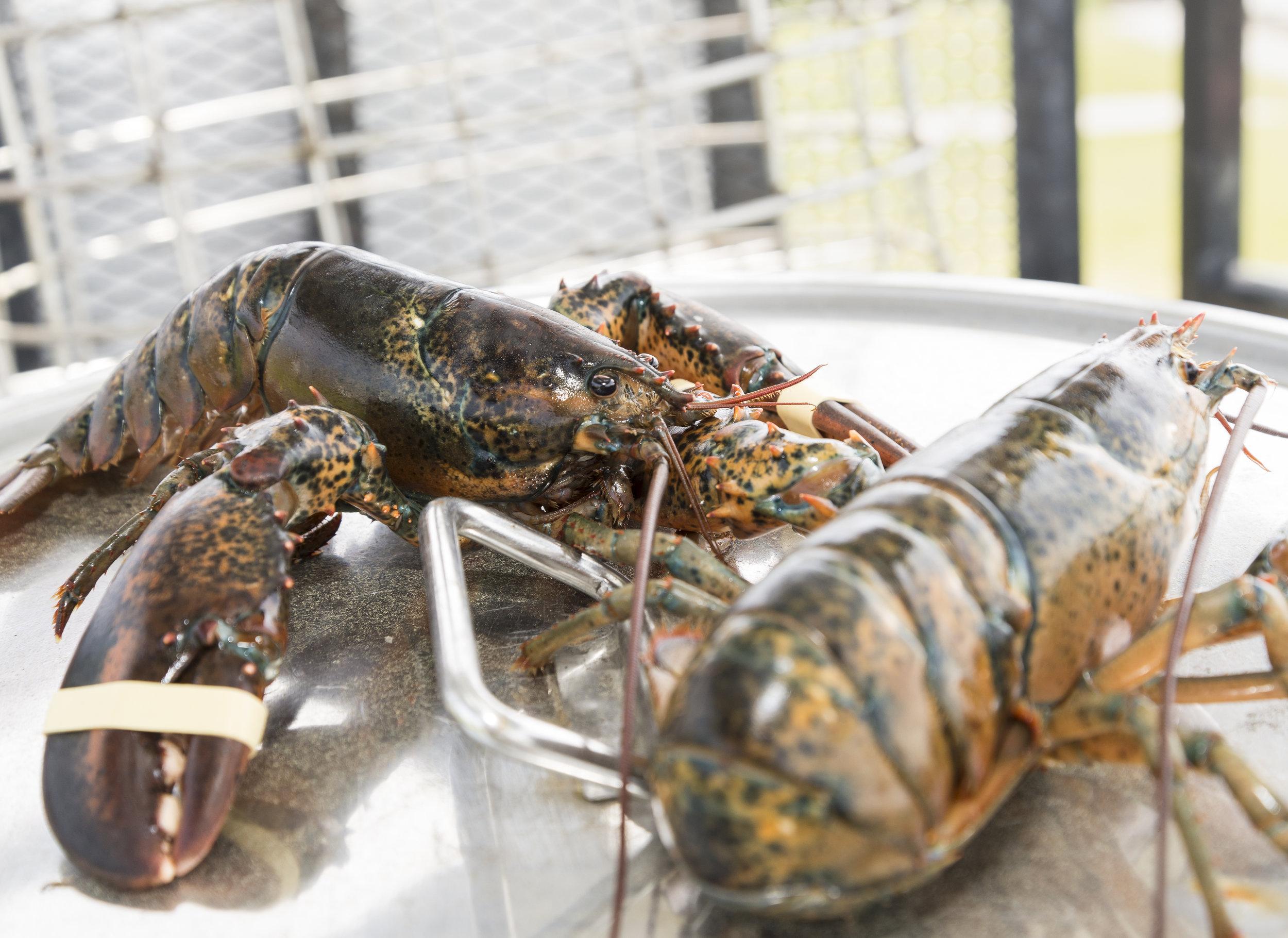 6_8_17 Lobster Bake Truck_7.jpg