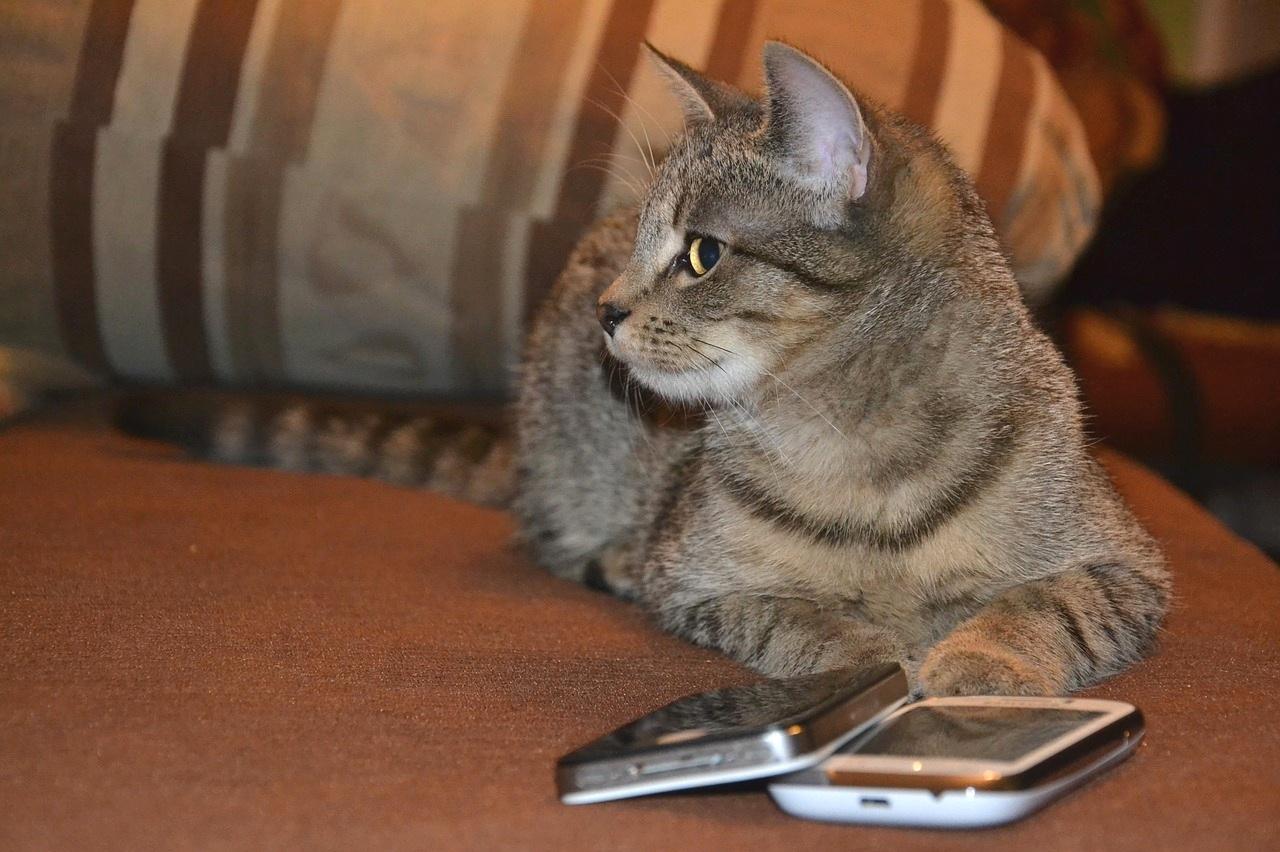 cat-phone.jpg