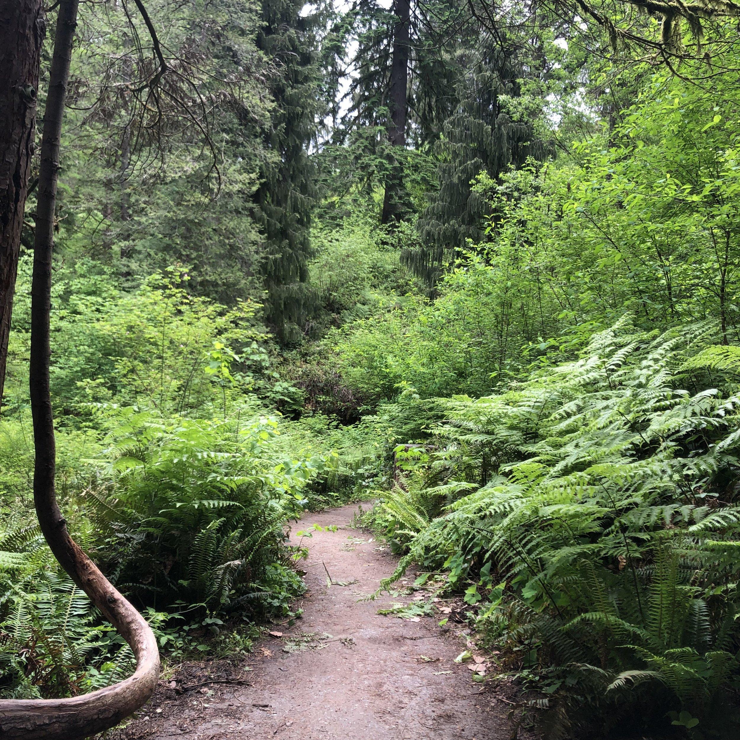 PDX forest path.jpg