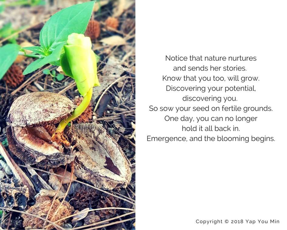 Nature connection story: Emergence