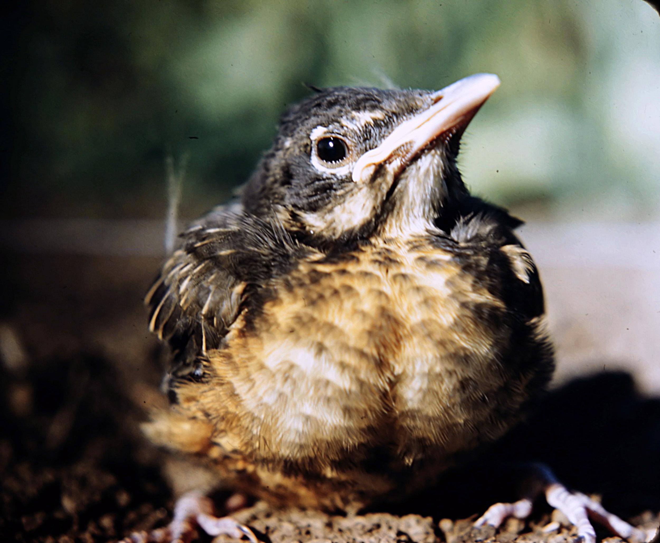 1. Birds - 0027.jpg