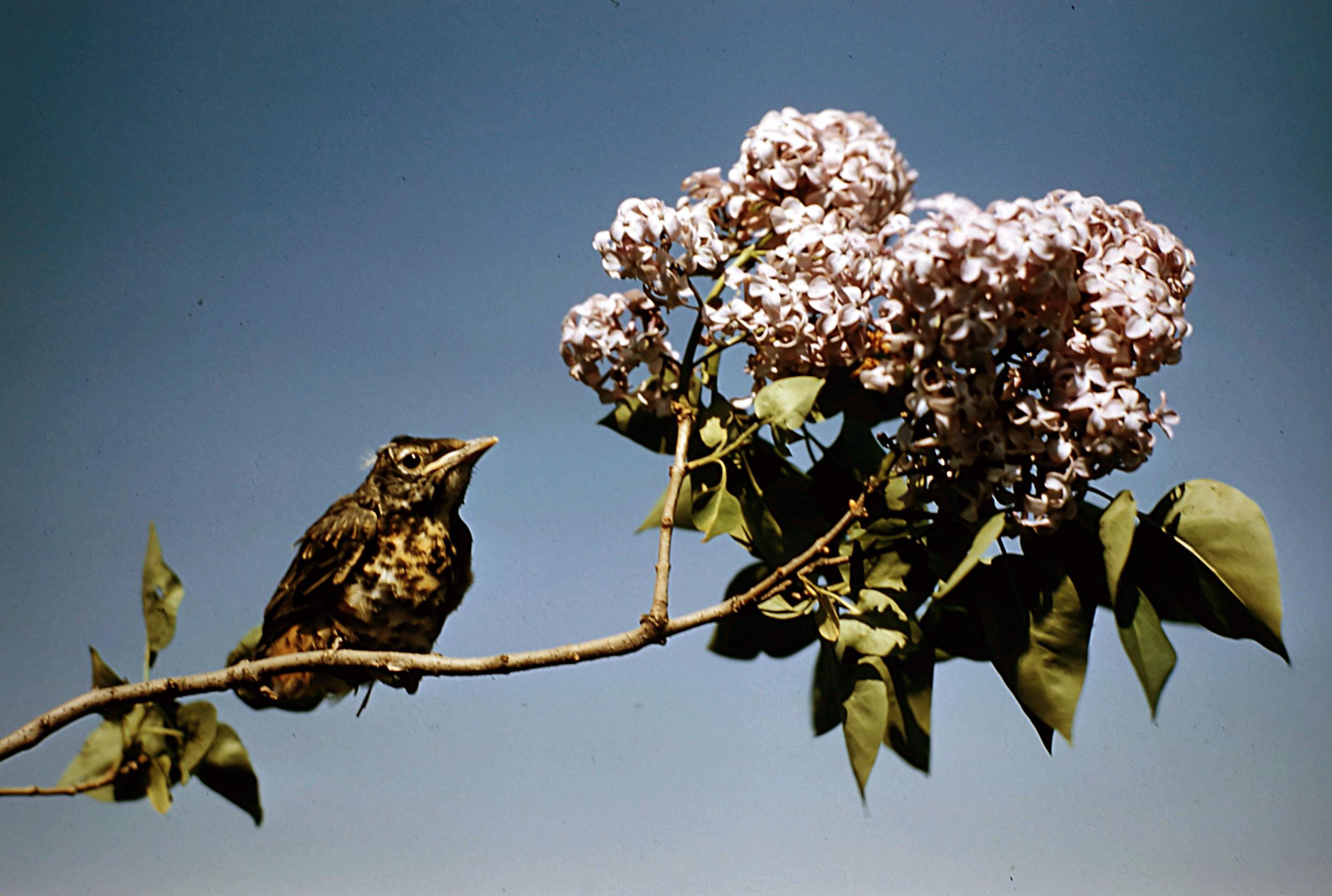 1. Birds - 0028.jpg