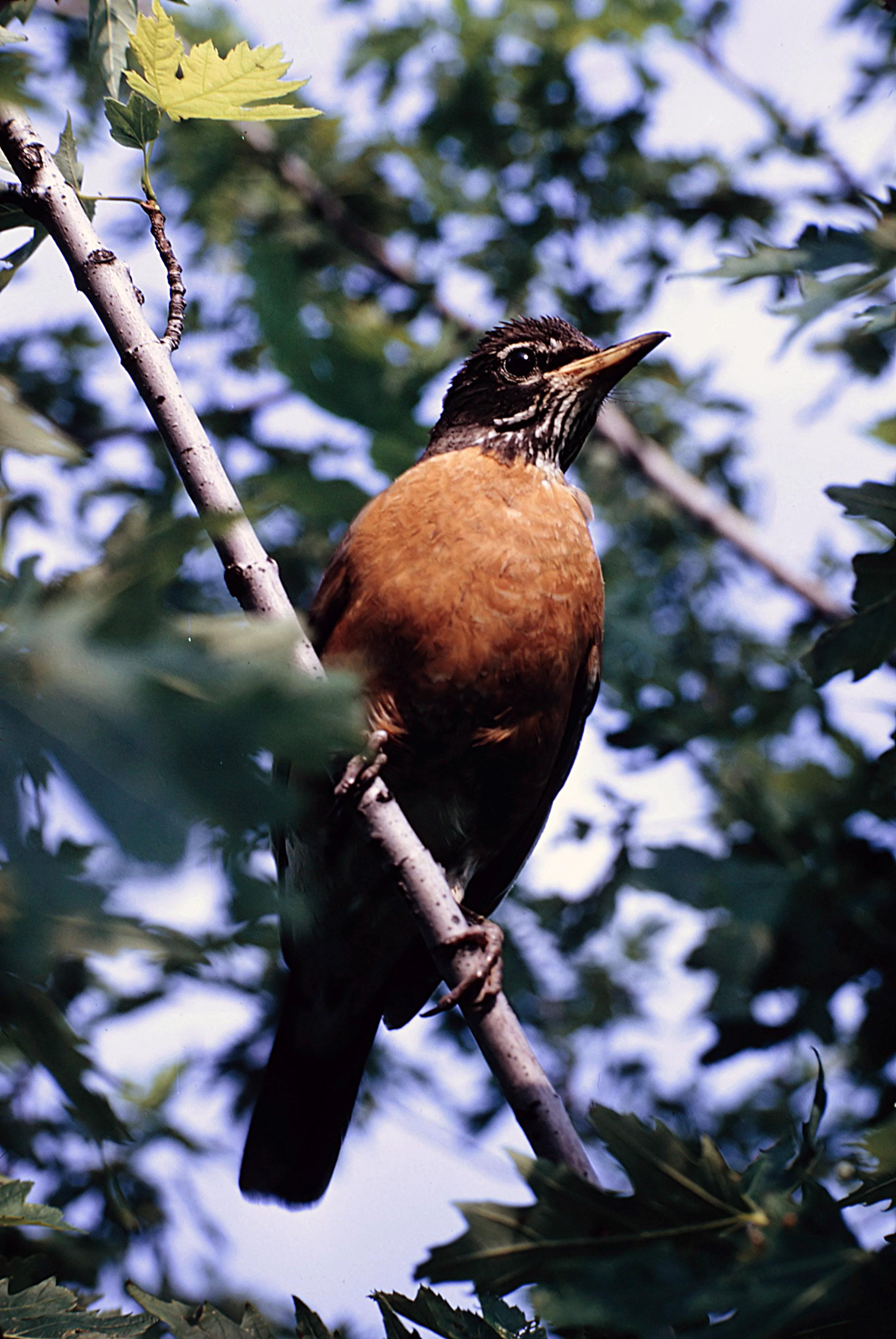 1. Birds - 0029.jpg