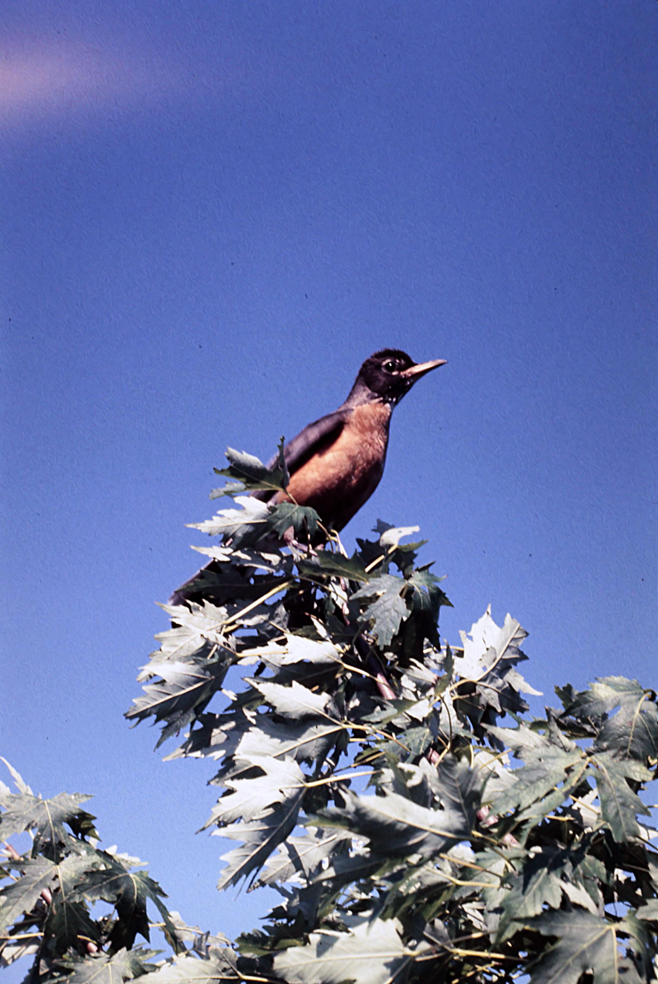 1. Birds - 0032.jpg
