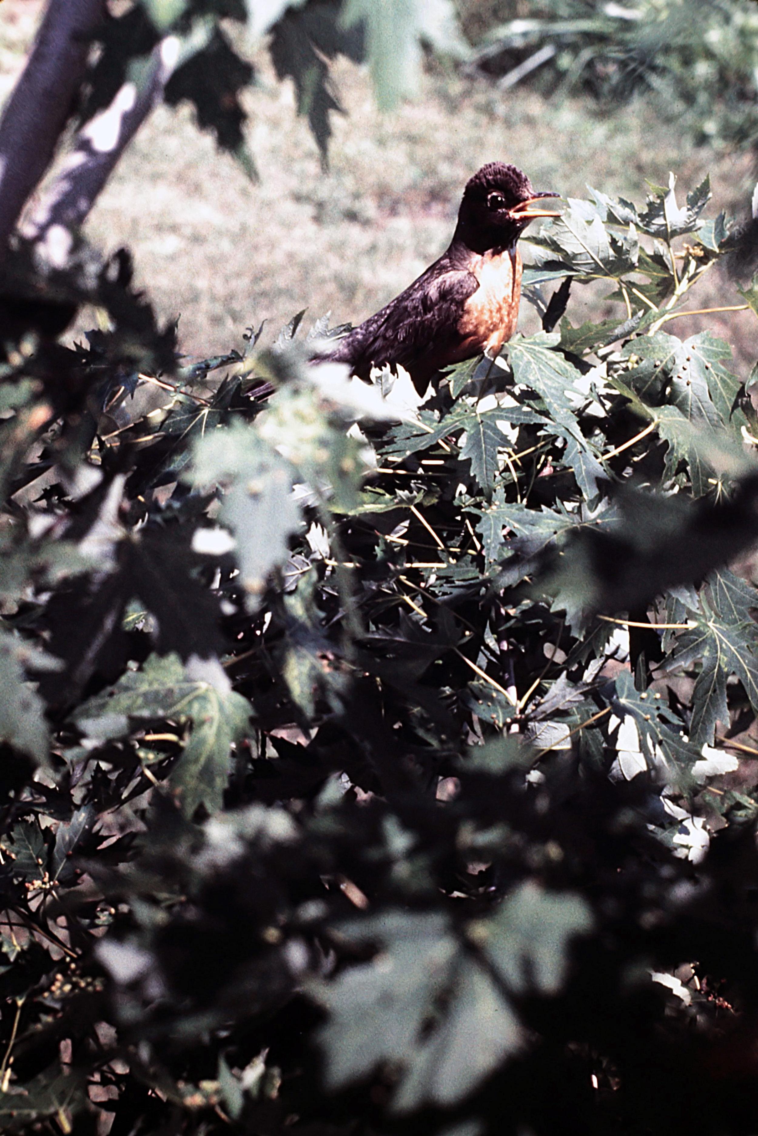 1. Birds - 0035.jpg