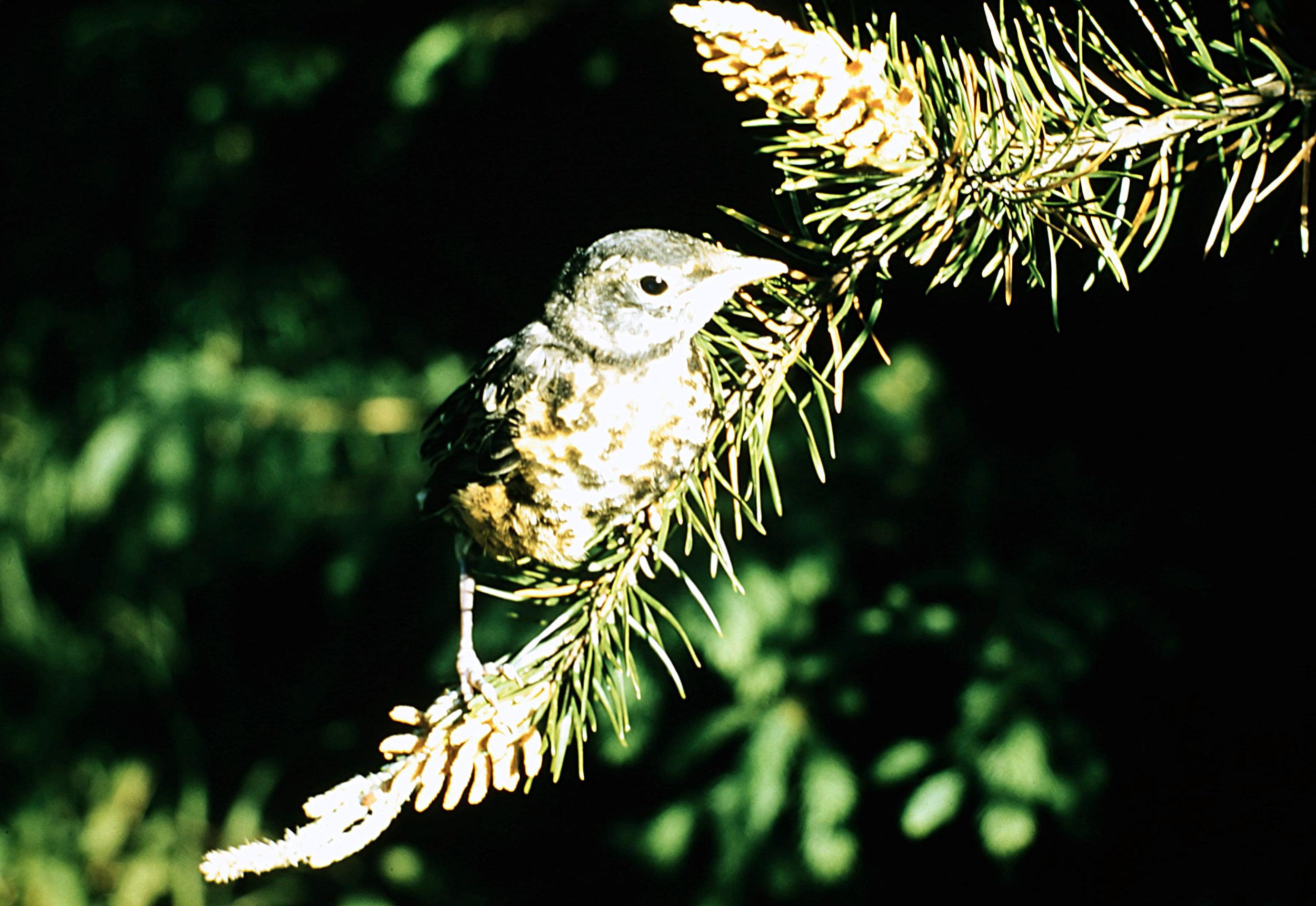 1. Birds - 0039.jpg