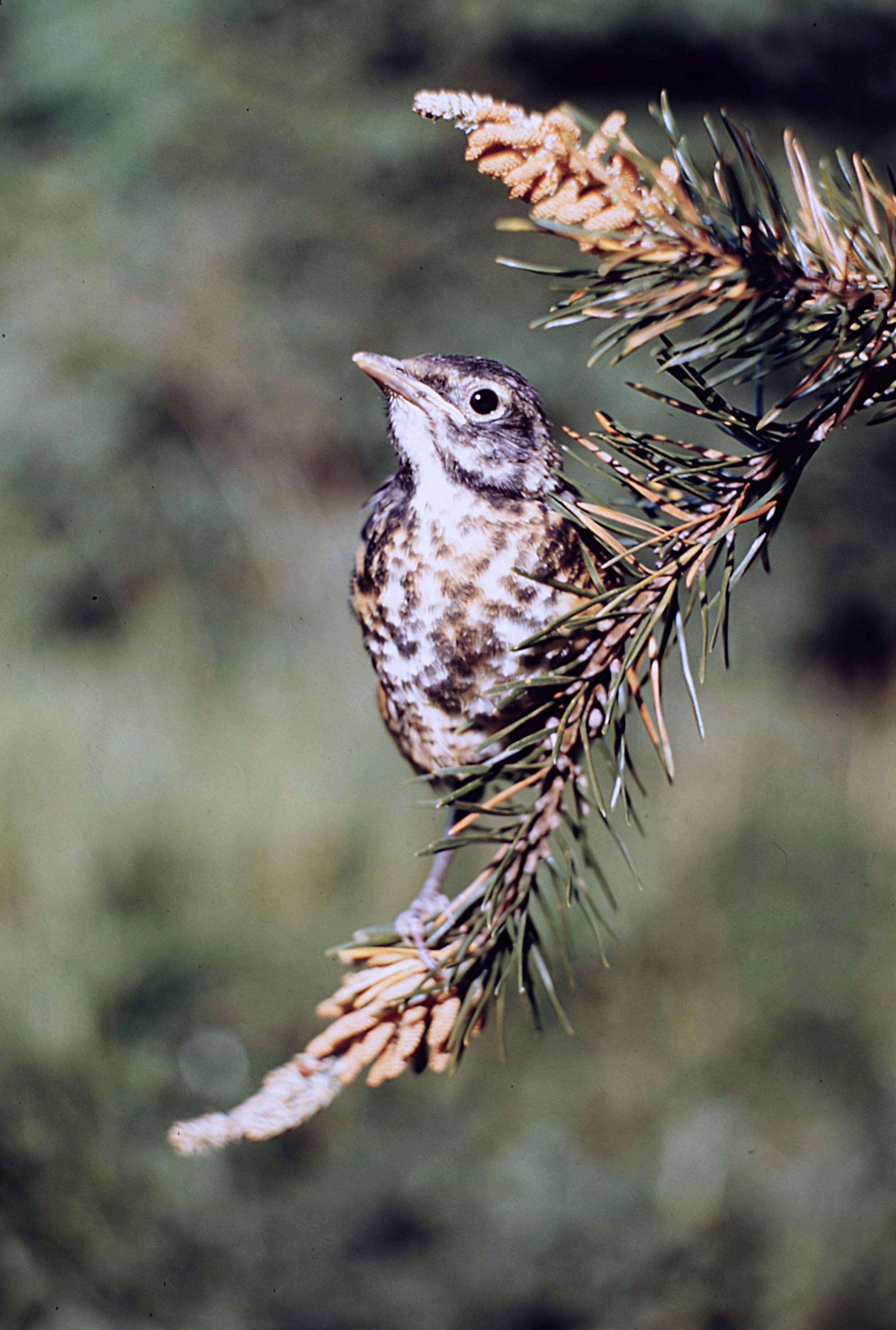 1. Birds - 0040.jpg