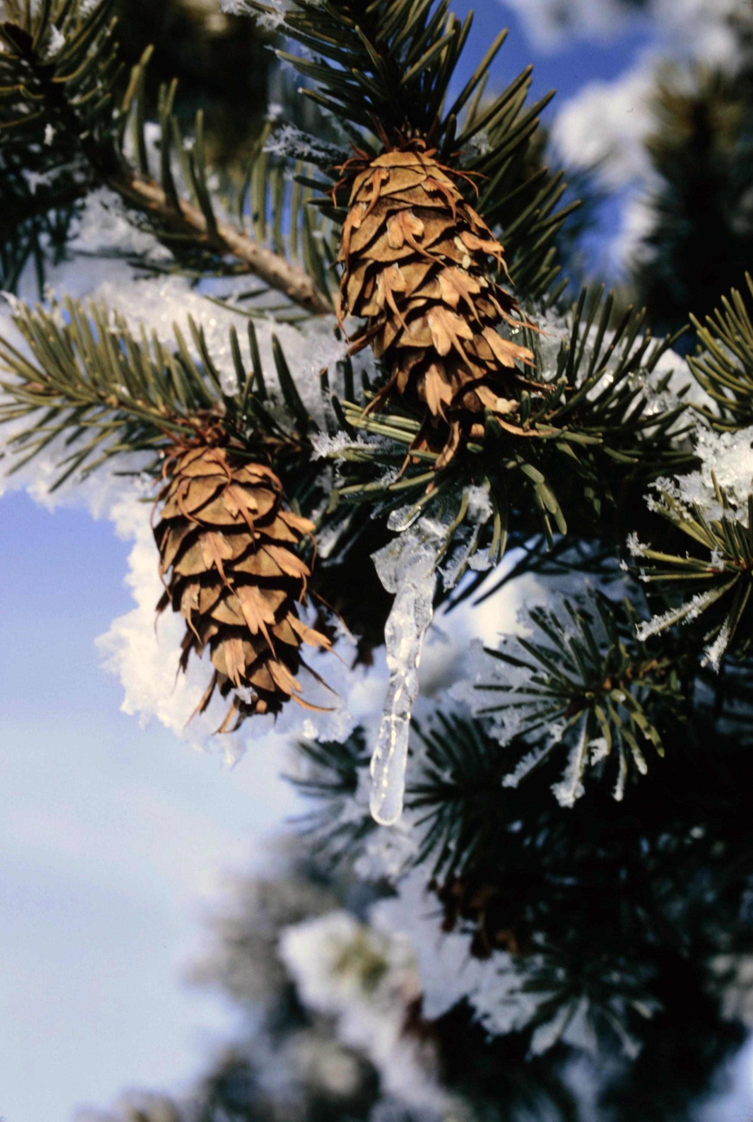 Winter 1 - 0033.jpg