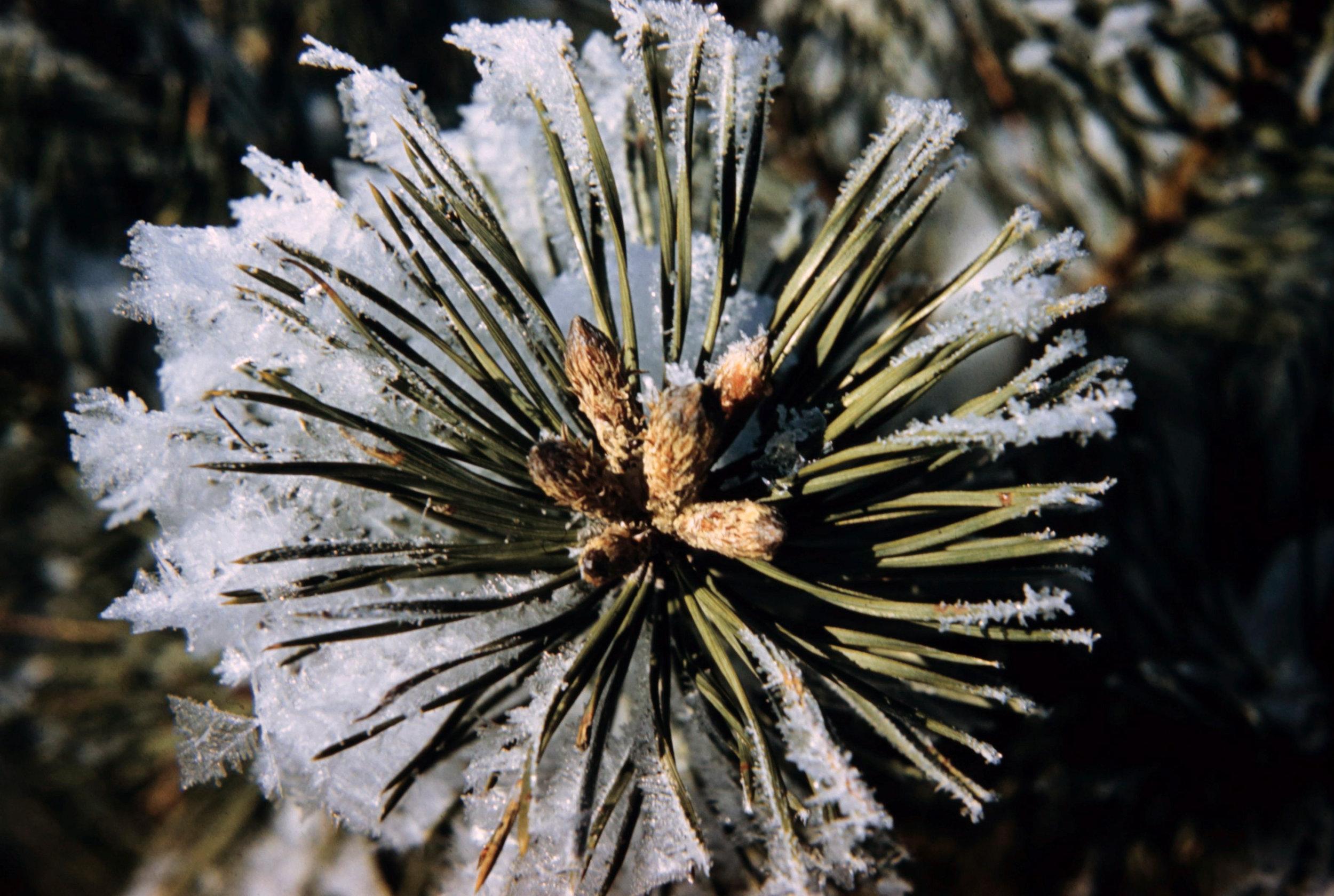 Winter 1 - 0037.jpg