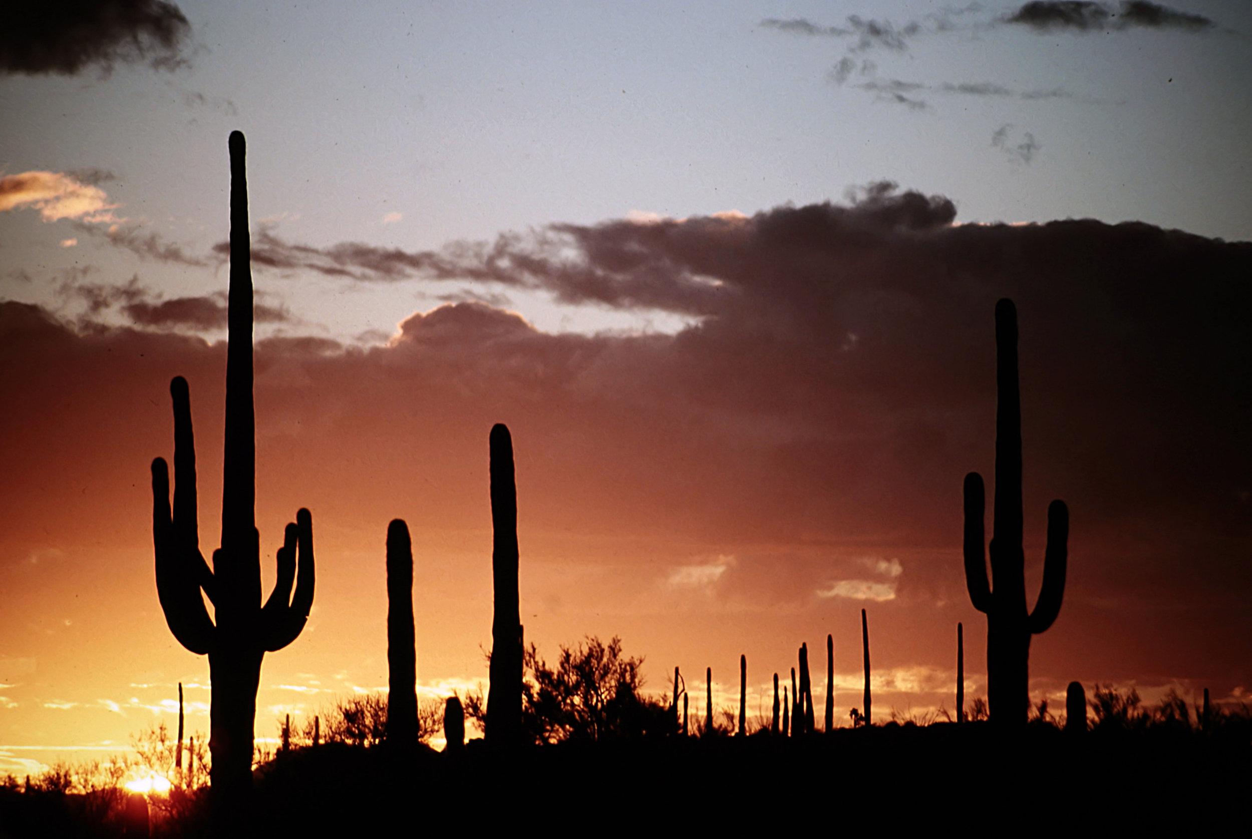 7. Tucson - 0014.jpg