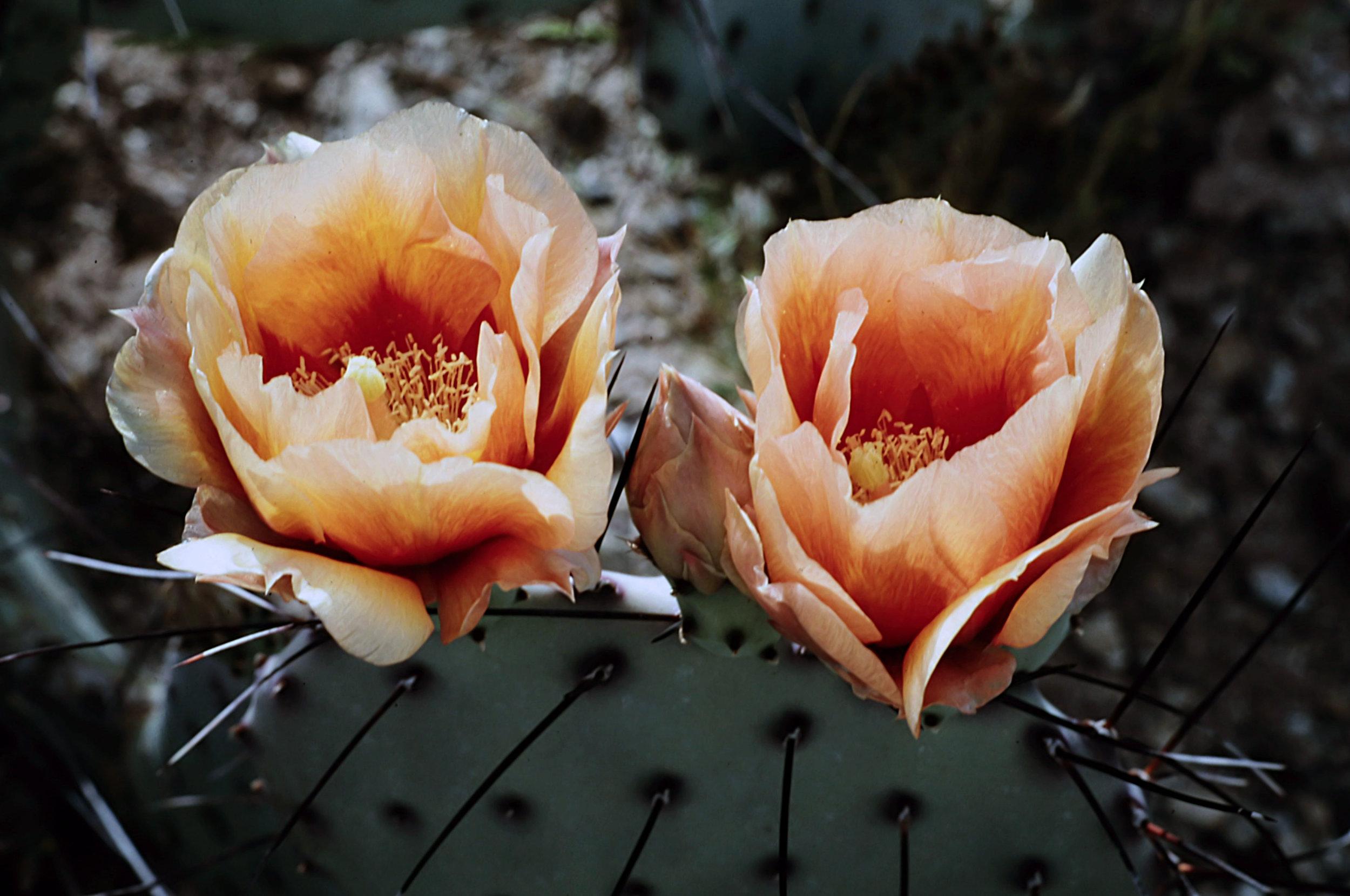 10. Tucson - 0005.jpg