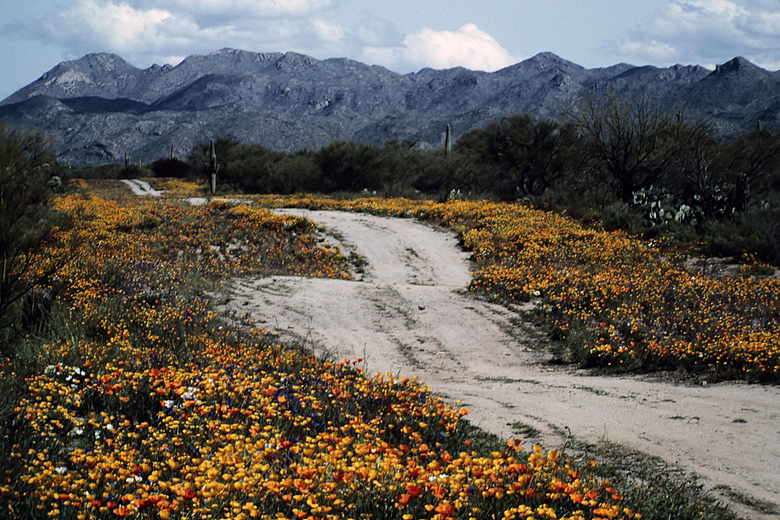 14. Tucson - 0015.jpg