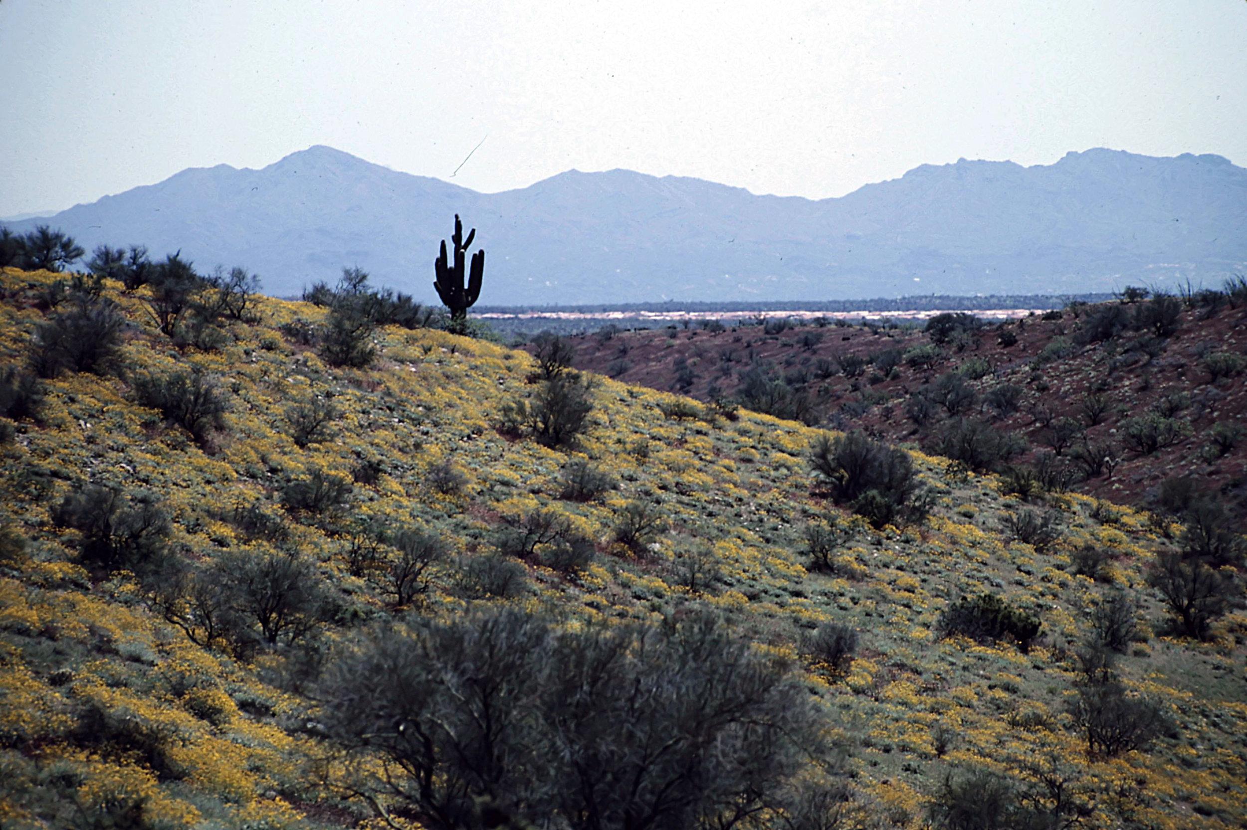 14. Tucson - 0039.jpg