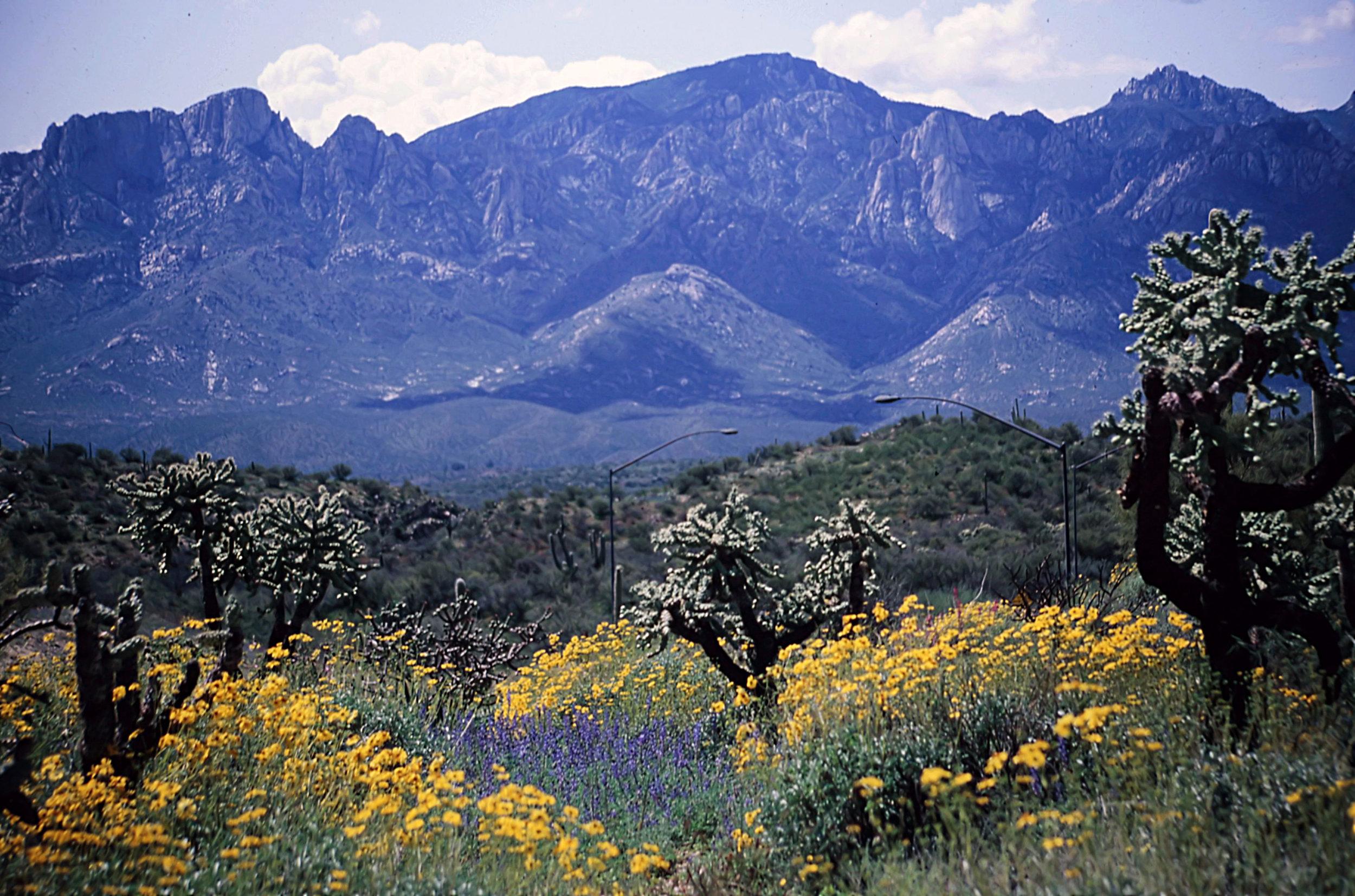 15. Tucson - 0019.jpg