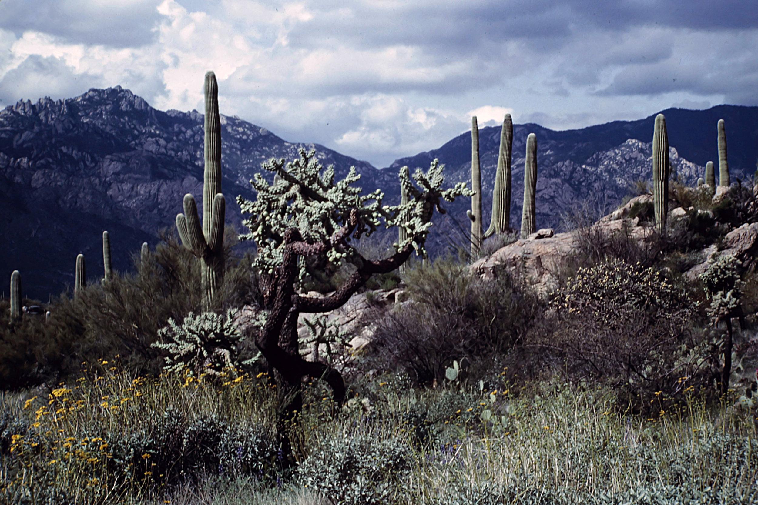 15. Tucson - 0021.jpg