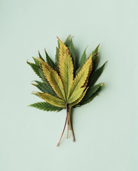 Linalool- - Terpene: LinaloolAroma: FloralReputation: Stress-relieverAlso found in: Lavender, coriander