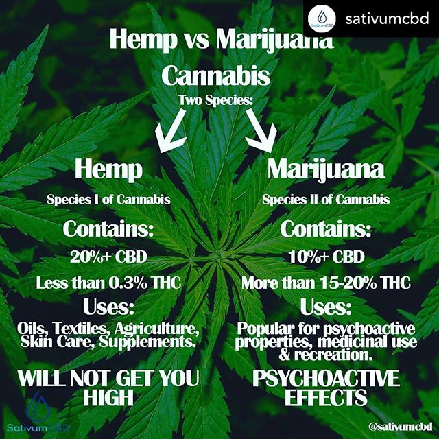 Re-post @sativumcbd HEMP Vs MARIJUANA  Firstly, it is important to distinguish that Hemp and Marijuana are not the same. They are both species of the Cannabis plant, however they are different varieties with different characteristics.  Most people are unaware of the differences and so become confused as to the distinction. This is what leads to myths and misinformation being spread.  HEMP- is merely a common name for cannabis that contains very low levels of THC (usually