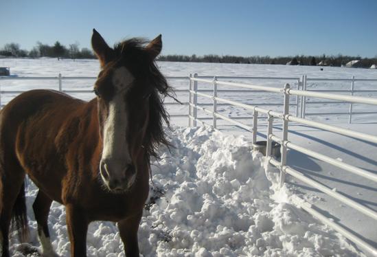 ourhorses2.jpg