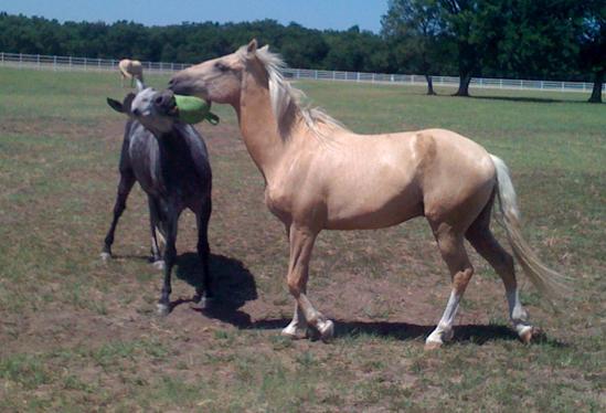 ourhorses3.jpg