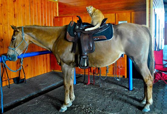 ourhorses6.jpg