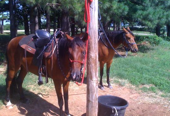 ourhorses8.jpg