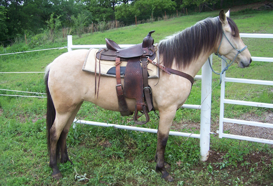 ourhorses9.jpg
