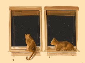 """Orange Brothers at Night Window"""