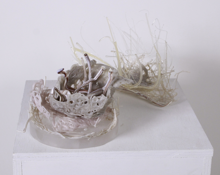 Sea Nest