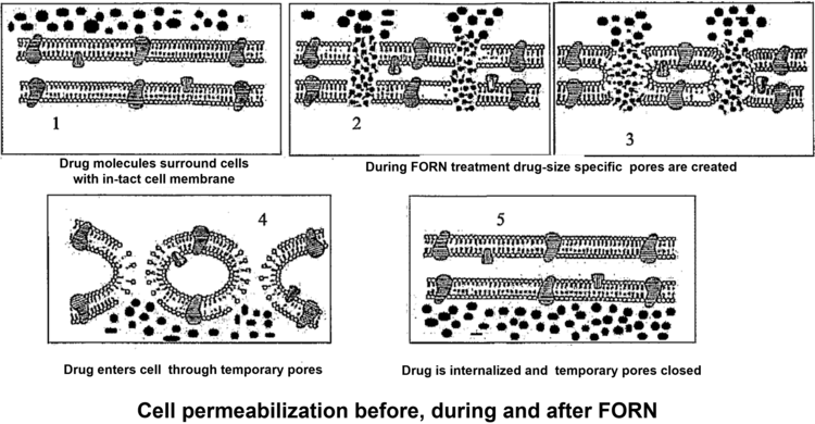 Cell Permeabilization Schematic