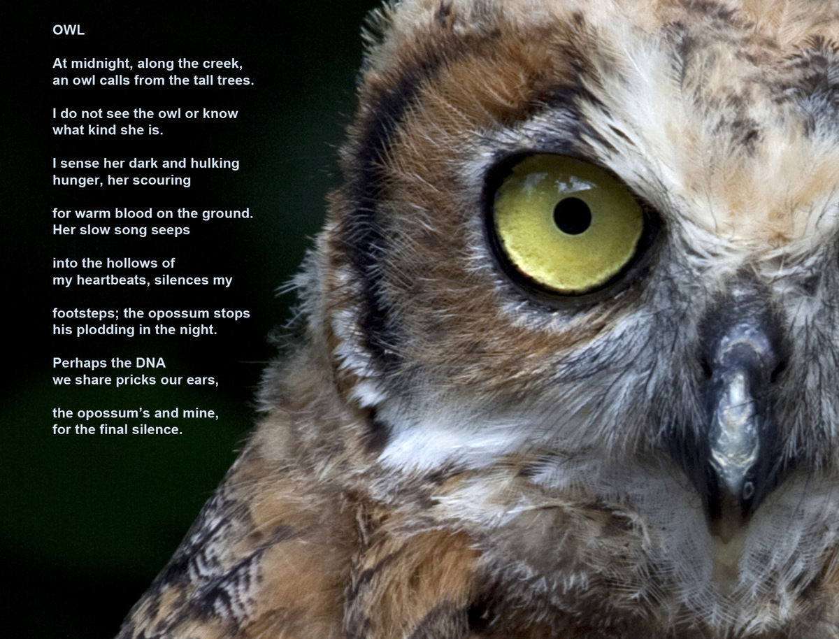 Nature & Wildlife Poetry - Owl Photograph, Kathy & Bruce Nelson, Asheville, NC