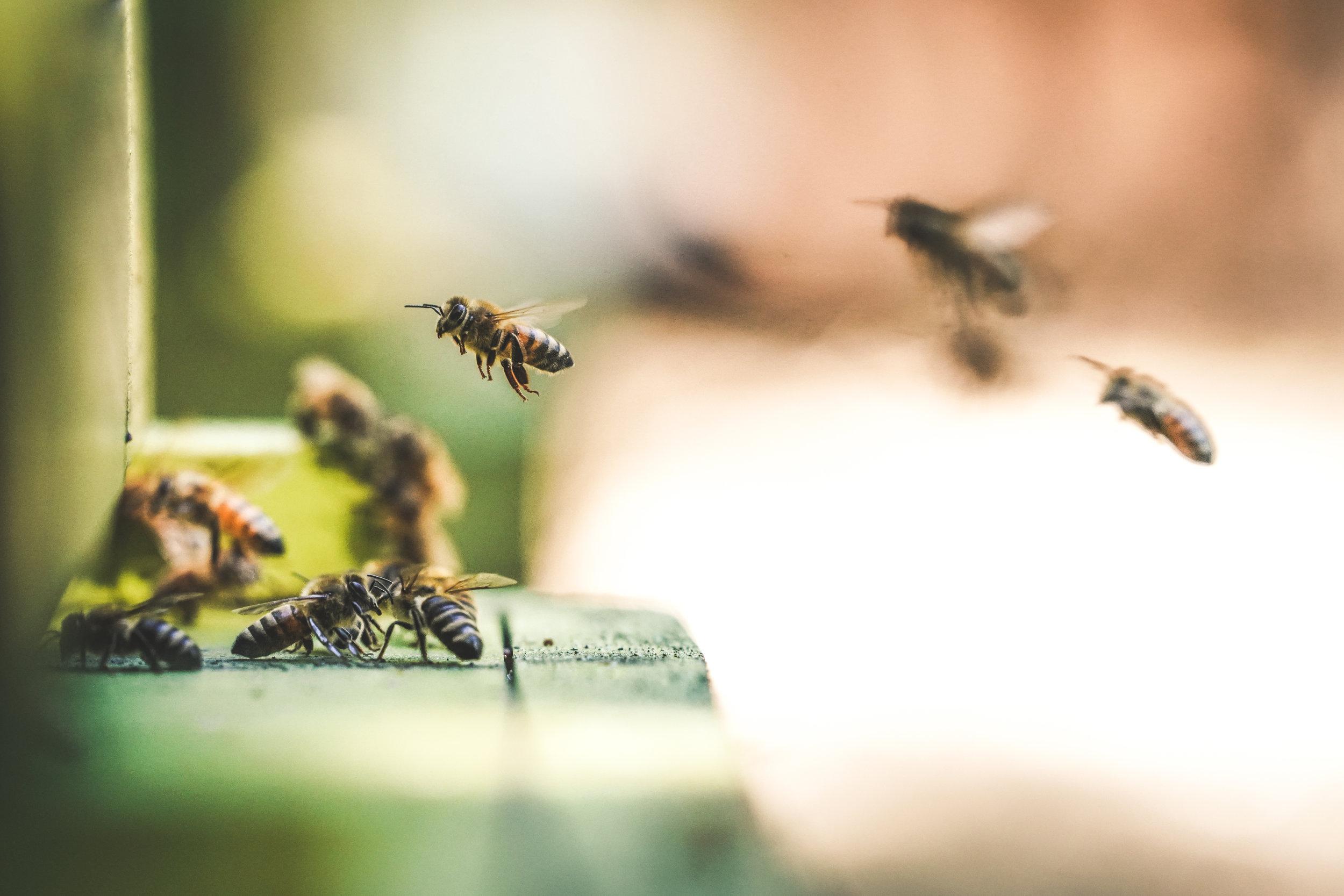 Pesticide-Free Bee Garden -