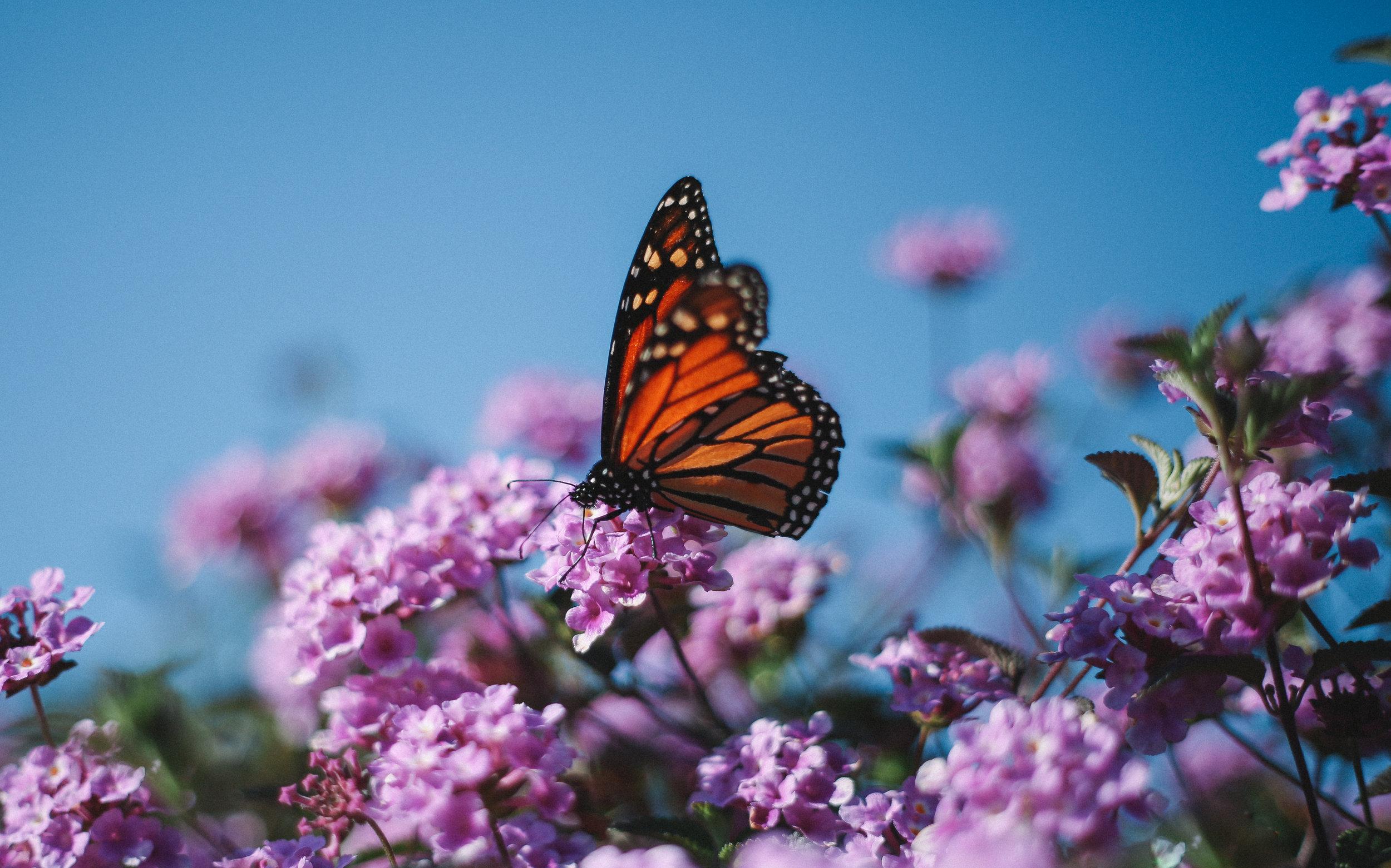 Interpretative Sign for the Nevada Bugs and Butterflies Garden -